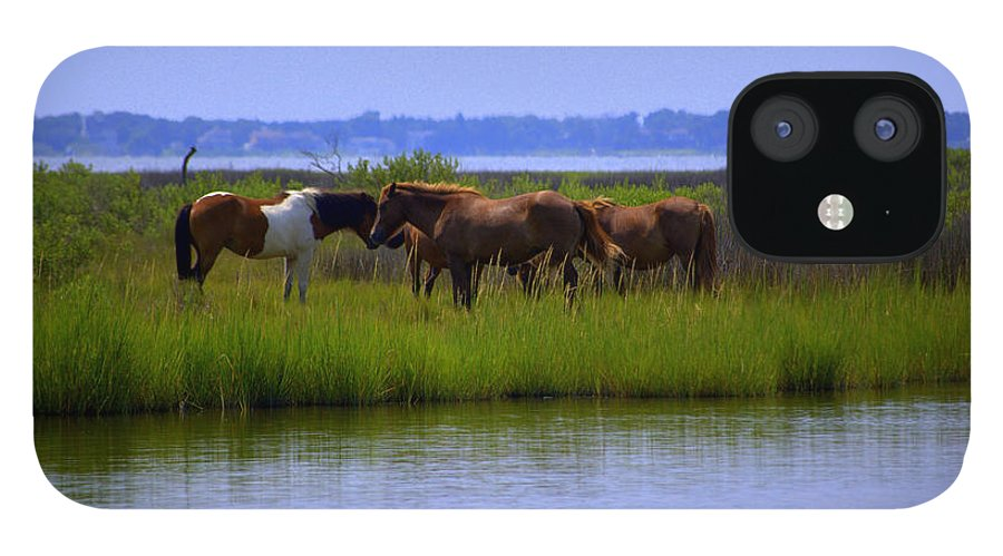 Horse IPhone 12 Case featuring the photograph Wild Horses Of Assateague Island by Robin Houde Photography