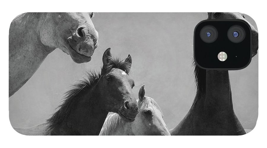 Horse iPhone 12 Case featuring the photograph Wild Horses Portrait by Antonio Arcos Aka Fotonstudio Photography