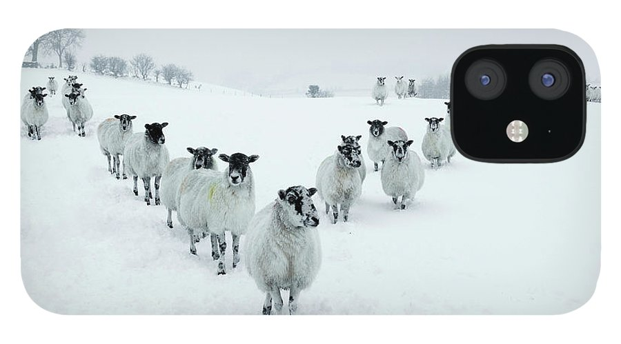 Cool Attitude IPhone 12 Case featuring the photograph Winter Sheep V Formation by Motorider