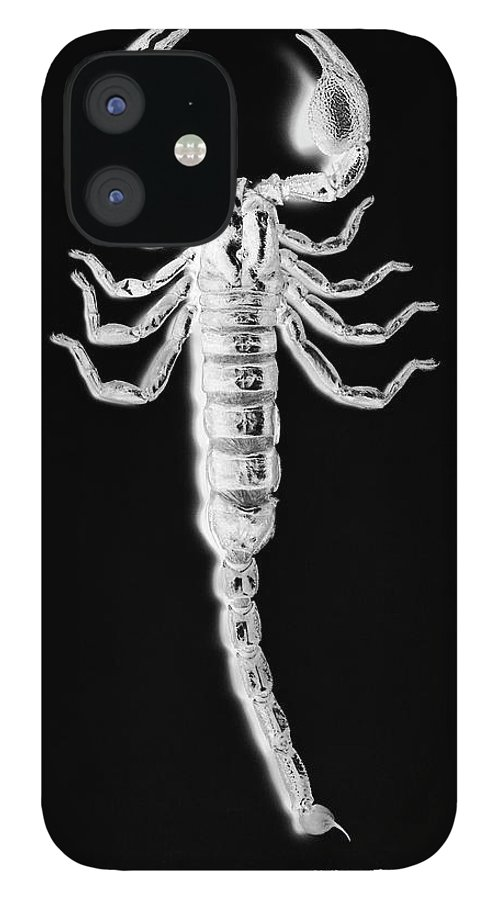 Risk IPhone 12 Case featuring the photograph X-ray Of African Sand Scorpion by Peter Dazeley
