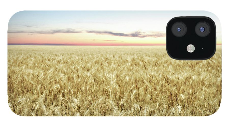 Scenics IPhone 12 Case featuring the photograph Xxl Wheat Field Twilight by Sharply done