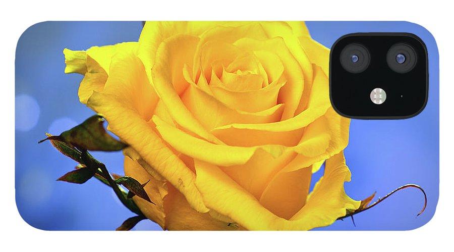 Slovenia IPhone 12 Case featuring the photograph Yellow Rose by © Karmen Smolnikar