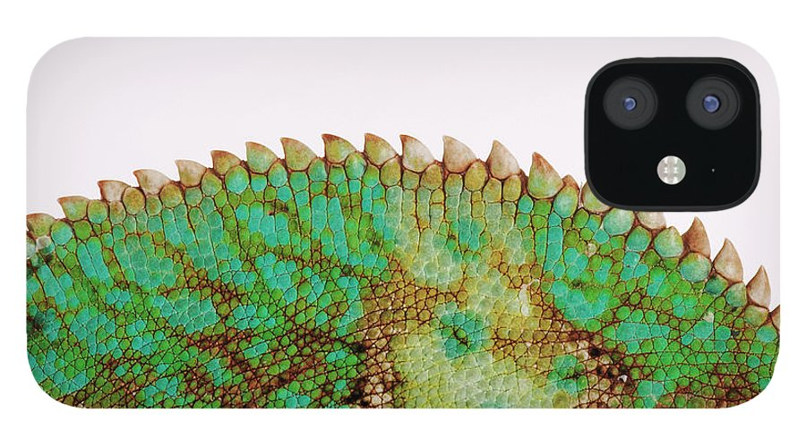 White Background IPhone 12 Case featuring the photograph Yemen Chameleon, Close-up Of Skin by Martin Harvey