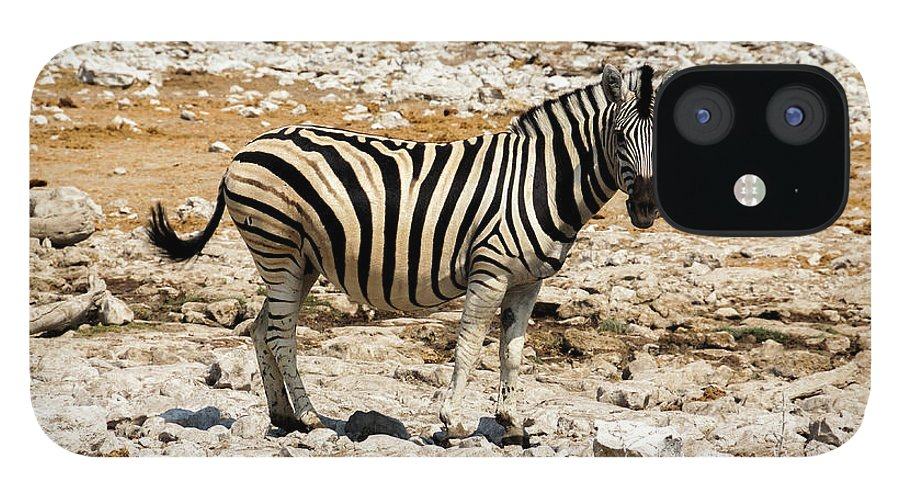 Animal Themes IPhone 12 Case featuring the photograph Zebra And White Rocks by Taken By Chrbhm
