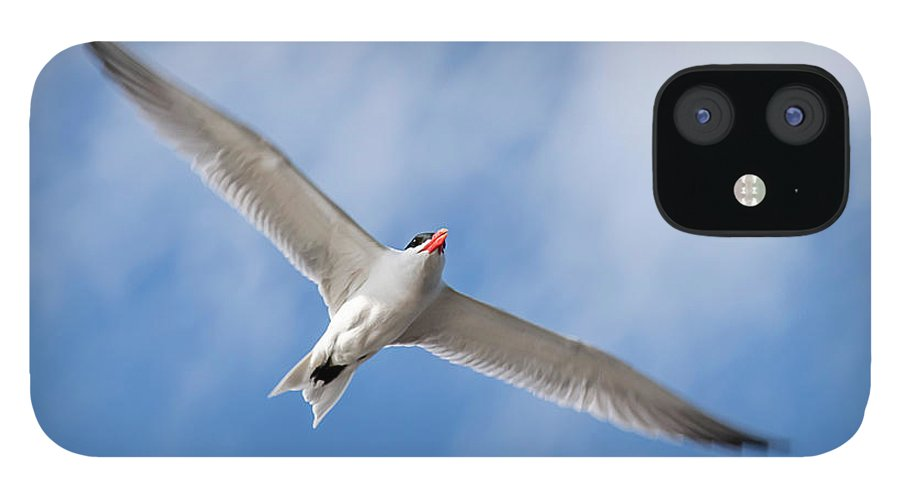 Bird IPhone 12 Case featuring the photograph 20-0607-0061 by Anthony Roma