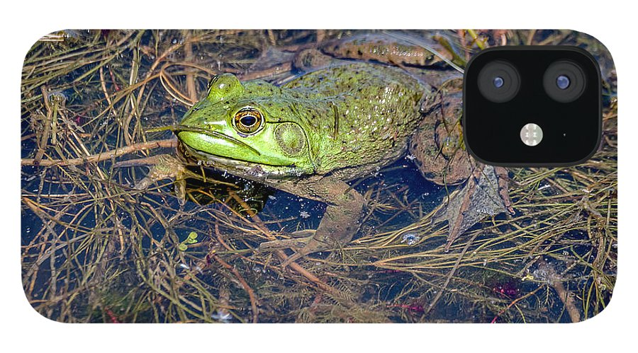 Animal IPhone 12 Case featuring the photograph 20-0616-0523 by Anthony Roma