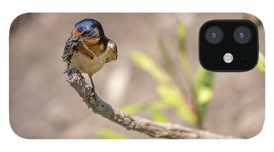 Bird IPhone 12 Case featuring the photograph 20-0616-0527 by Anthony Roma
