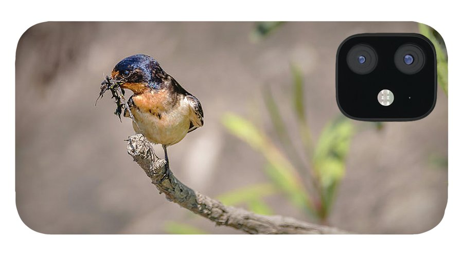 Bird IPhone 12 Case featuring the photograph 20-0616-0528 by Anthony Roma