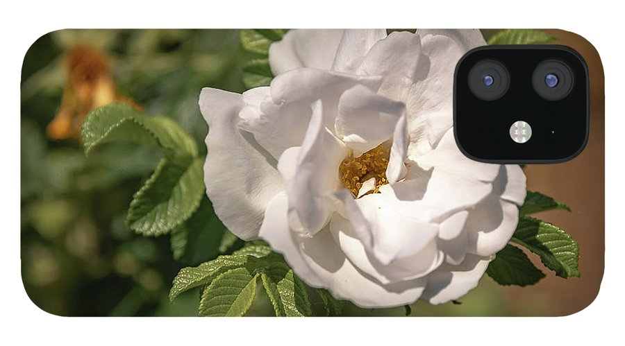 Flowers IPhone 12 Case featuring the photograph 20-0616-0550 by Anthony Roma