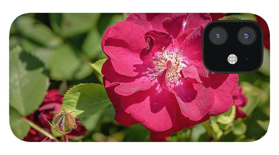Flowers IPhone 12 Case featuring the photograph 20-0616-0551 by Anthony Roma