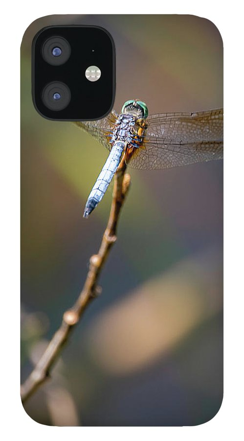 Insects IPhone 12 Case featuring the photograph 20-0616-0563 by Anthony Roma