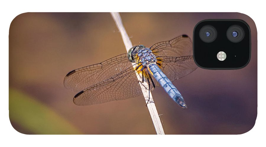 Insects IPhone 12 Case featuring the photograph 20-0616-0568 by Anthony Roma