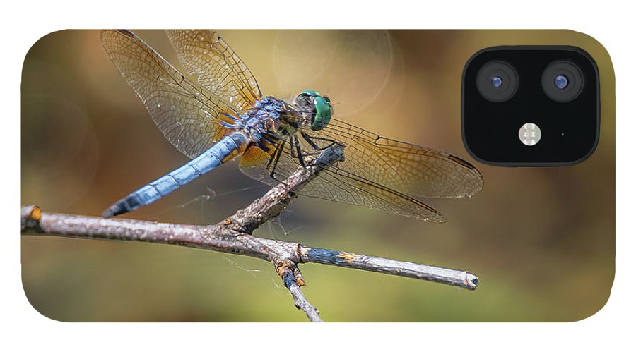 Insects IPhone 12 Case featuring the photograph 20-0616-0576 by Anthony Roma