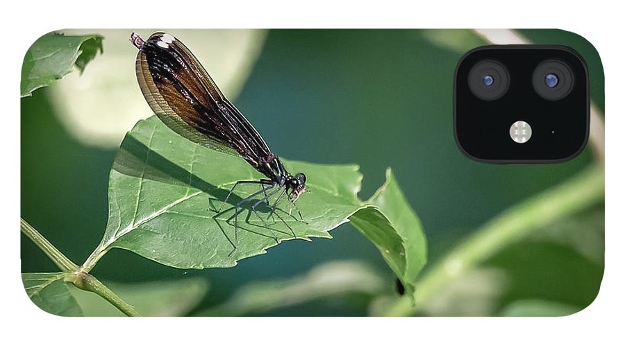 Insects IPhone 12 Case featuring the photograph 20-0621-0645 by Anthony Roma
