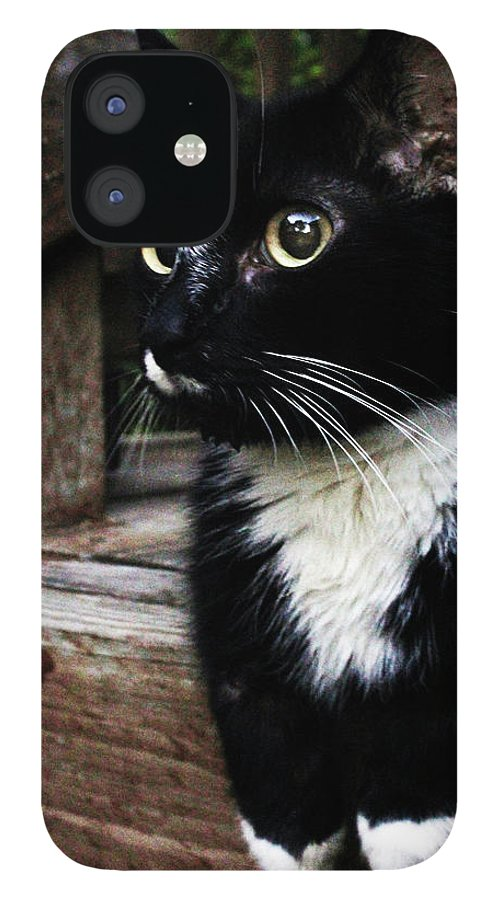 Cat IPhone 12 Case featuring the photograph A Cats Life by Holly Morris