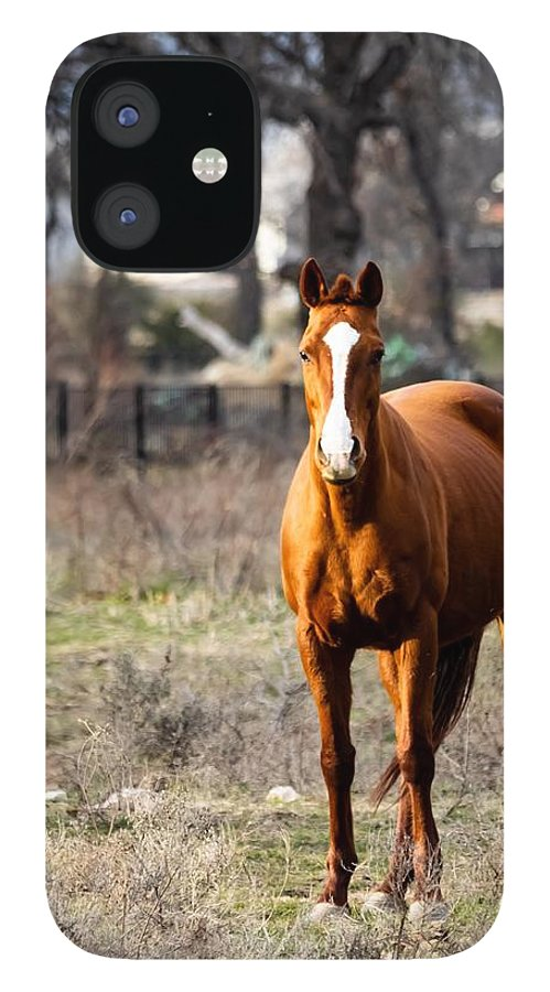 Horse IPhone 12 Case featuring the photograph Bay Horse 3 by C Winslow Shafer