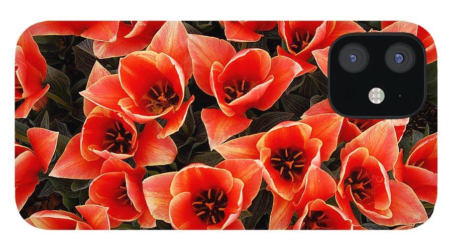 Bouquet Red Orange Tulips IPhone 12 Case featuring the photograph Bouquet of Red-Orange Tulips by Keith Gondron