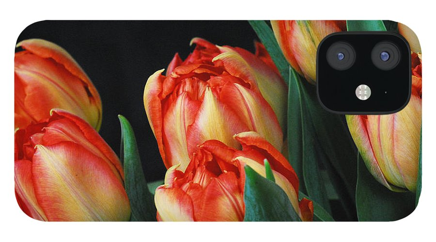 Tulip IPhone 12 Case featuring the photograph Budding tulips by Keith Gondron