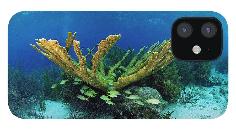 70007084 IPhone 12 Case featuring the photograph Elkhorn Coral by Hans Leijnse
