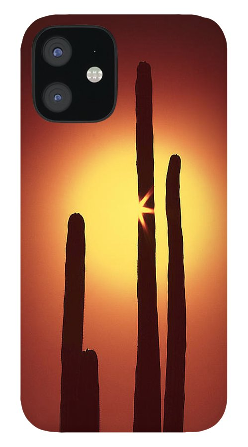 Sun IPhone 12 Case featuring the photograph Encinitas Cactus by Andre Aleksis