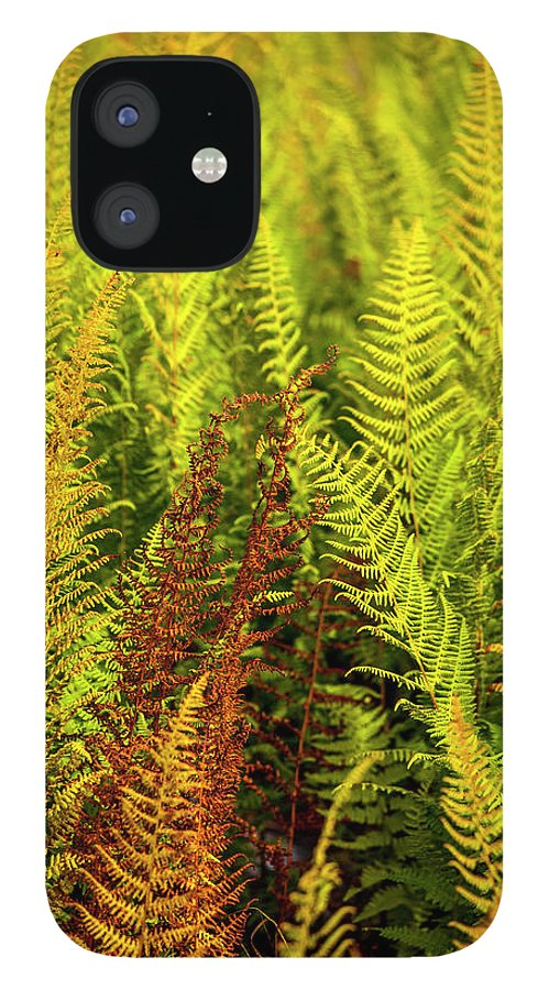 Ferns IPhone 12 Case featuring the photograph Ferns by Trevor Slauenwhite