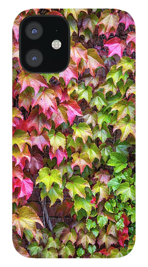 Ivy IPhone 12 Case featuring the photograph Ivy Wall by Trevor Slauenwhite