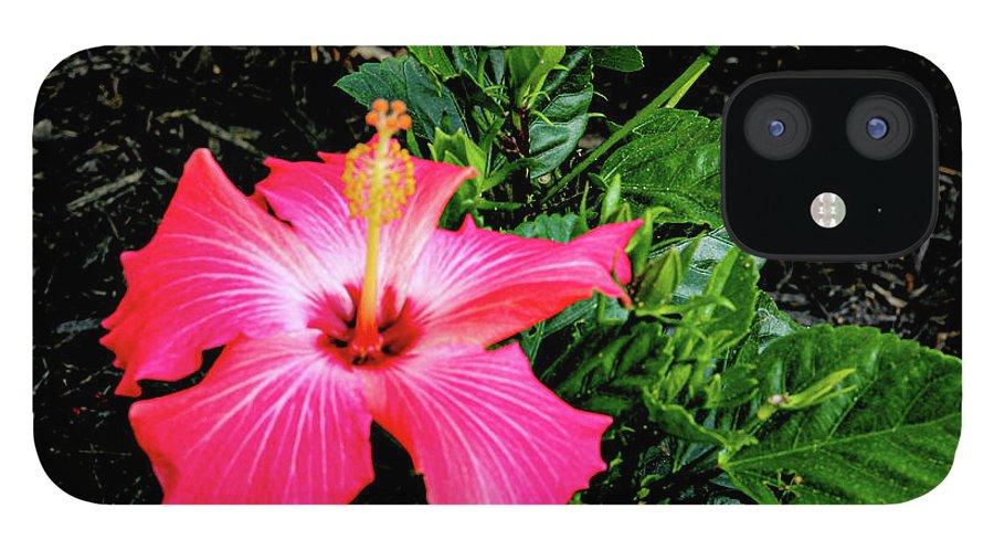 Flower IPhone 12 Case featuring the digital art La cayena by Daniel Cornell