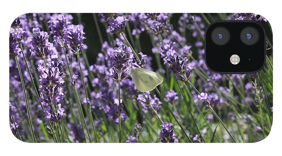 Lavender IPhone 12 Case featuring the photograph Lavender by Vicki Cridland