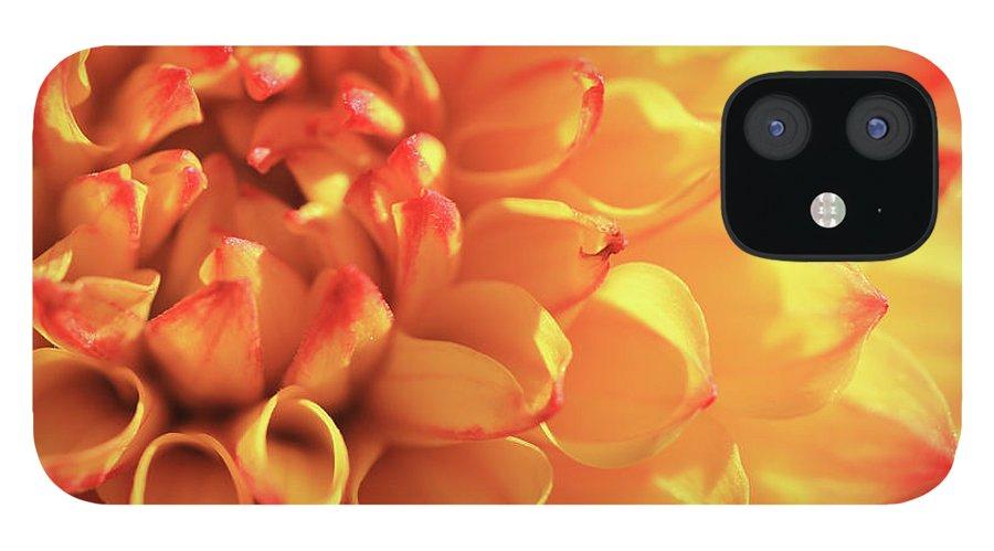 Mirella Dahlia IPhone 12 Case featuring the photograph Orange Mirella Dahlia Flower by Trevor Slauenwhite