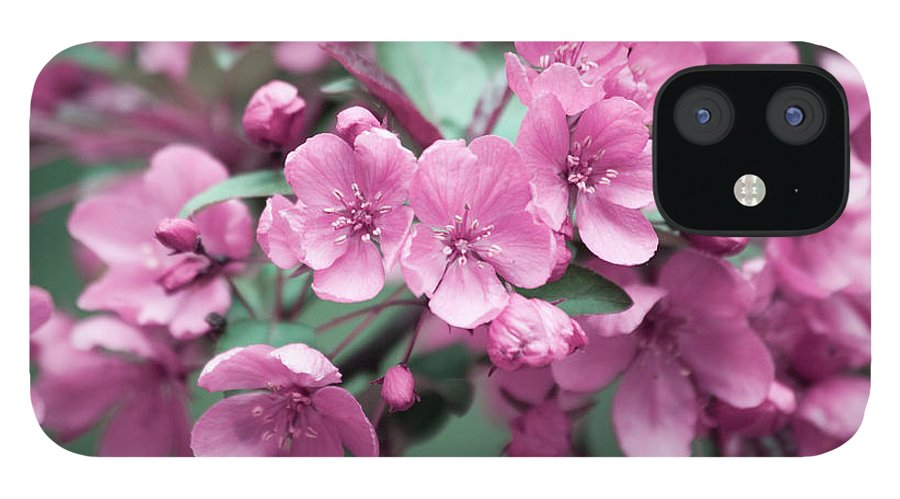 Cherry Blossoms IPhone 12 Case featuring the photograph Pink Cherry Blossoms by Trevor Slauenwhite