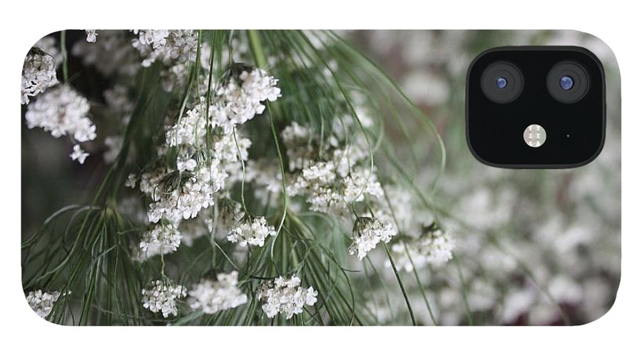 Queen Anne's Lace IPhone 12 Case featuring the photograph Queen Anne's Lace by Vicki Cridland