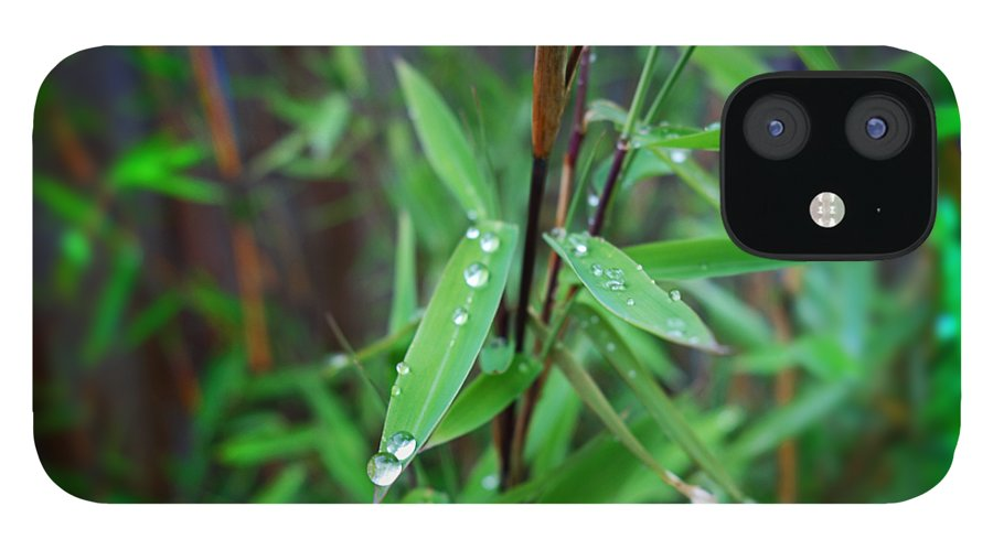 Rain Drops IPhone 12 Case featuring the painting Rain On Bamboo by Charles Stuart