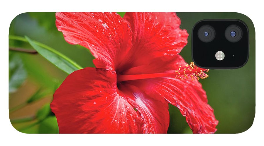 Hibiscus IPhone 12 Case featuring the photograph Red Hibiscus Rosemallow by Trevor Slauenwhite