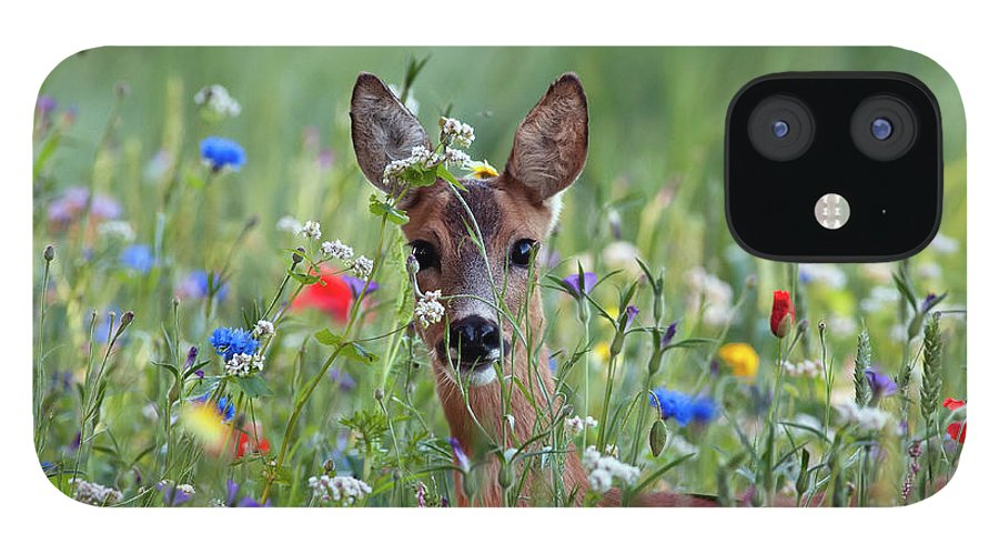 00540443 iPhone 12 Case featuring the photograph Roe Deer Amid Wildflowers by Ronald Stiefelhagen