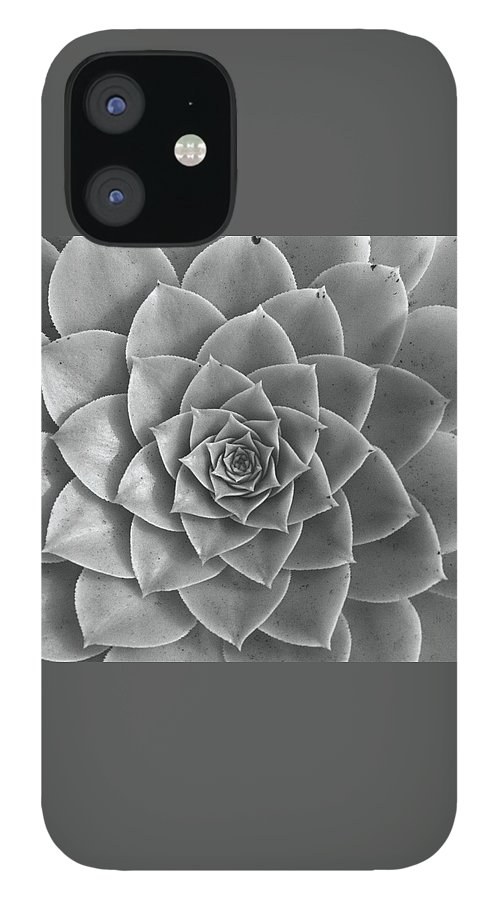 Rosette of Succulent - Aeonium Holochrysum IPhone 12 Case