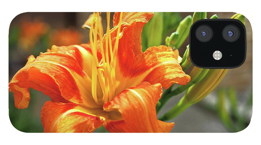 Orange IPhone 12 Case featuring the photograph Spring Flower 14 by C Winslow Shafer