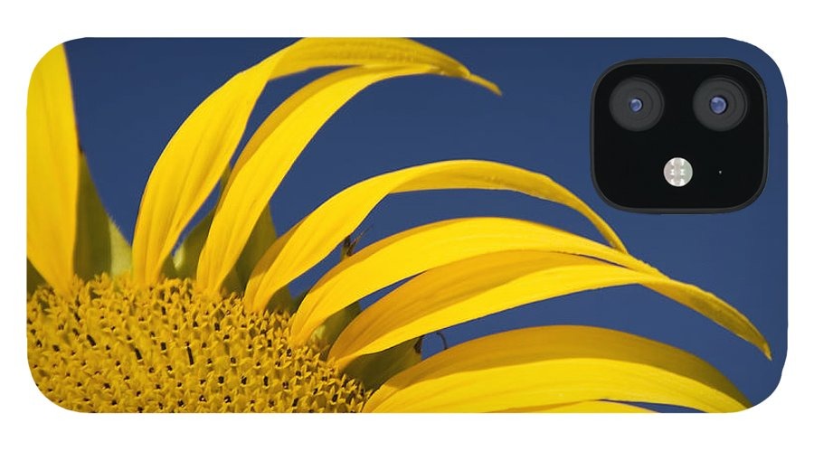 3scape IPhone 12 Case featuring the photograph Sunflower by Adam Romanowicz