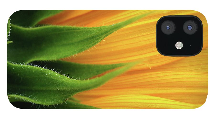 Sunflower IPhone 12 Case featuring the photograph Sunflower by Trevor Slauenwhite
