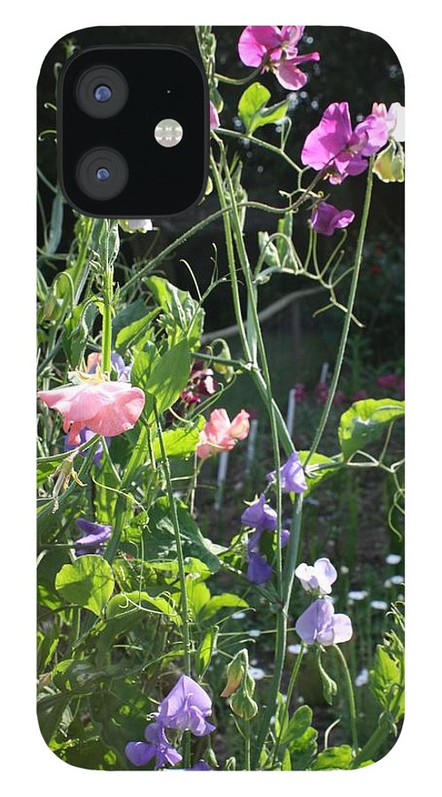 Sweet Peas IPhone 12 Case featuring the photograph Sweet Pea Climbers by Vicki Cridland