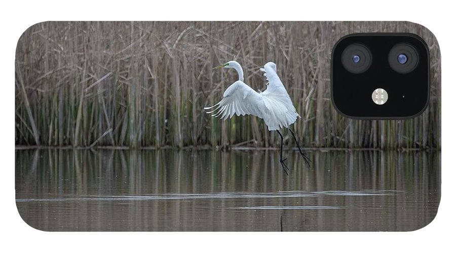 White Egret IPhone 12 Case featuring the photograph White Egret - 2 by David Bearden
