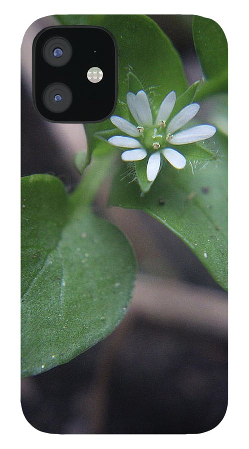 Wildflower IPhone 12 Case featuring the photograph White Wildflower by Holly Morris