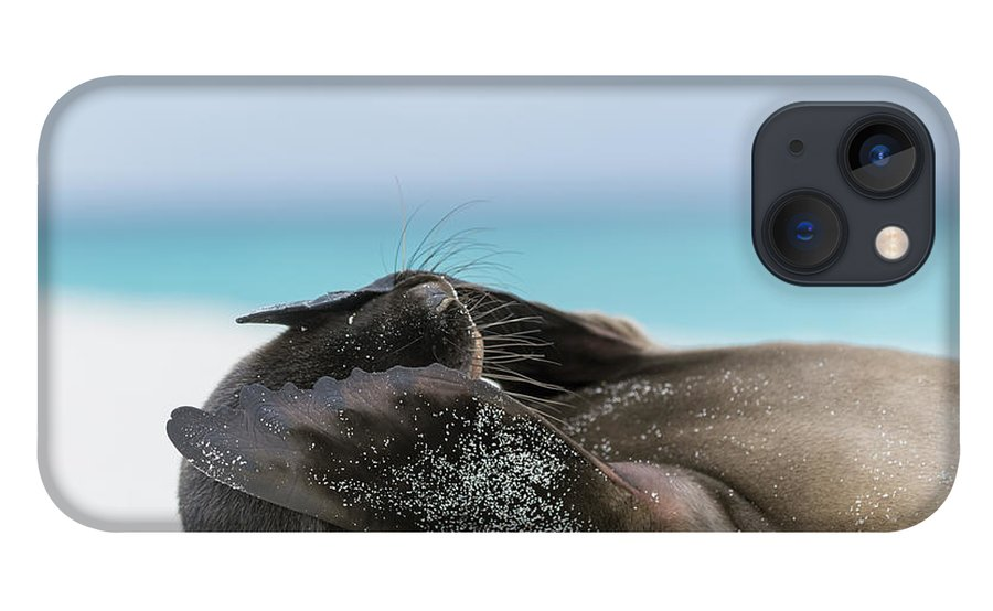 Tui De Roy iPhone 13 Case featuring the photograph Galapagos Sea Lion Pup Covering Face by Tui De Roy