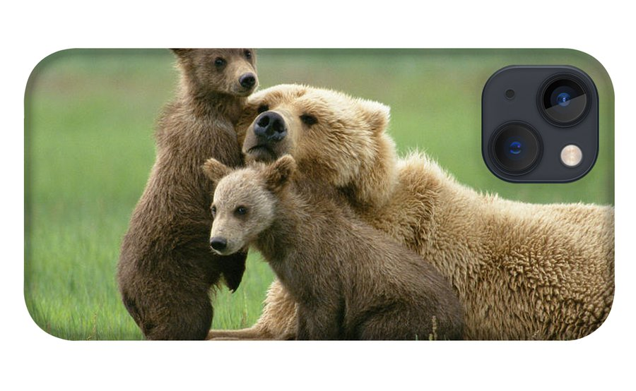 00345263 iPhone 13 Case featuring the photograph Grizzly Cubs Play With Mom by Yva Momatiuk John Eastcott