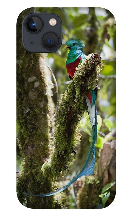Feb0514 iPhone 13 Case featuring the photograph Resplendent Quetzal Male Costa Rica by Konrad Wothe