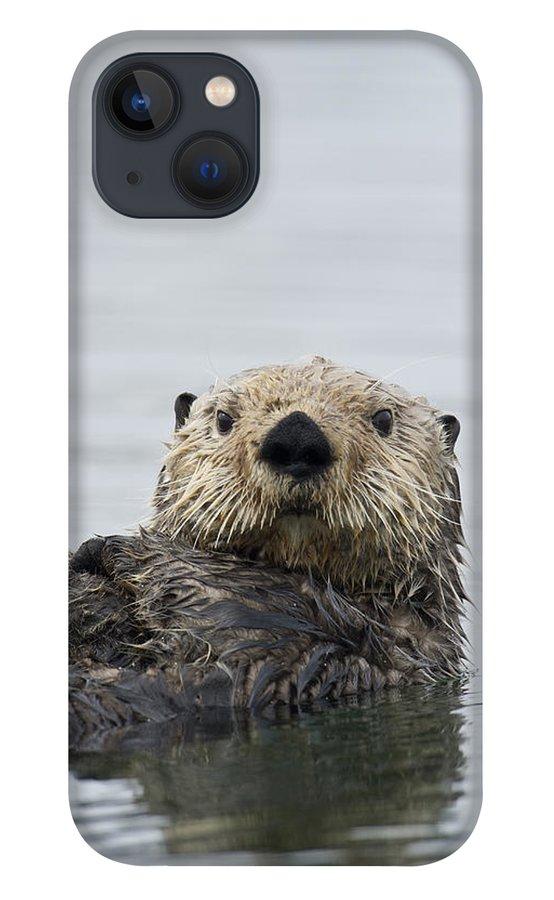 Michael Quinton iPhone 13 Case featuring the photograph Sea Otter Alaska by Michael Quinton