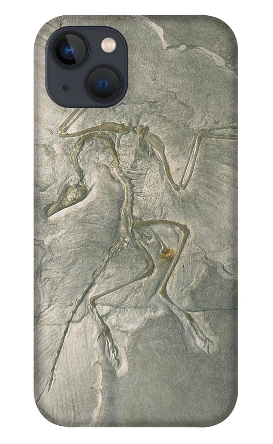 Feb0514 iPhone 13 Case featuring the photograph Archaeopteryx Bird Fossil Solnhofen by Konrad Wothe