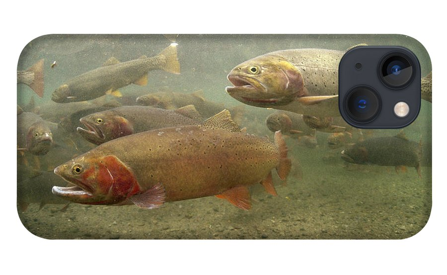 Feb0514 iPhone 13 Case featuring the photograph Cutthroat Trout In The Spring Idaho by Michael Quinton