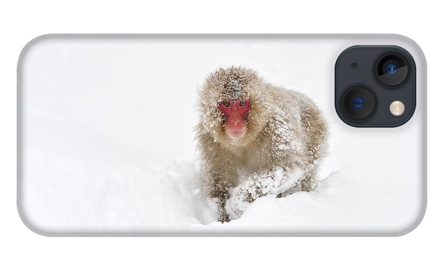Thomas Marent iPhone 13 Case featuring the photograph Japanese Macaque In Snow Jigokudani by Thomas Marent