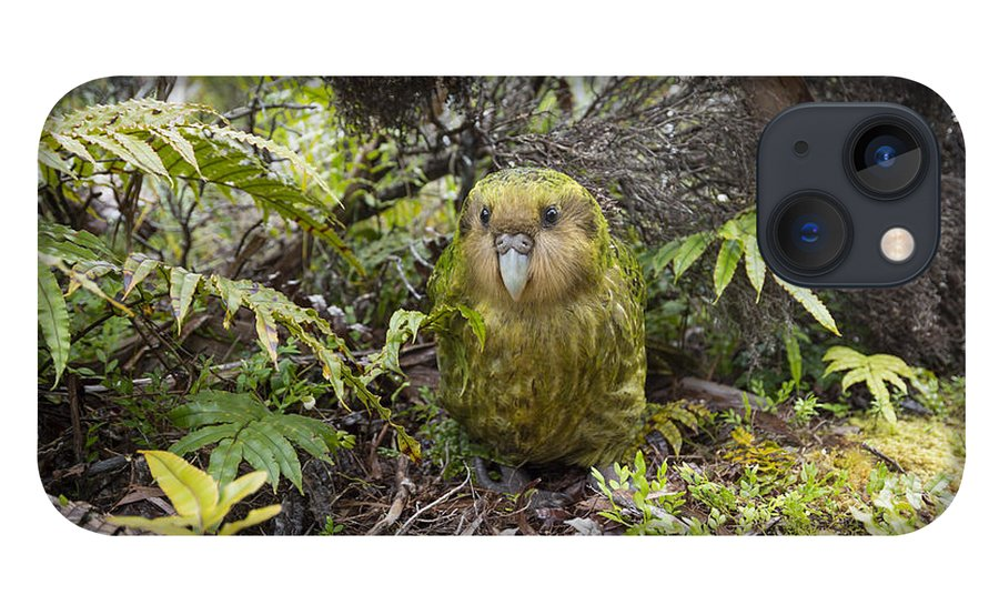 Tui De Roy iPhone 13 Case featuring the photograph Kakapo Male In Forest Codfish Island by Tui De Roy