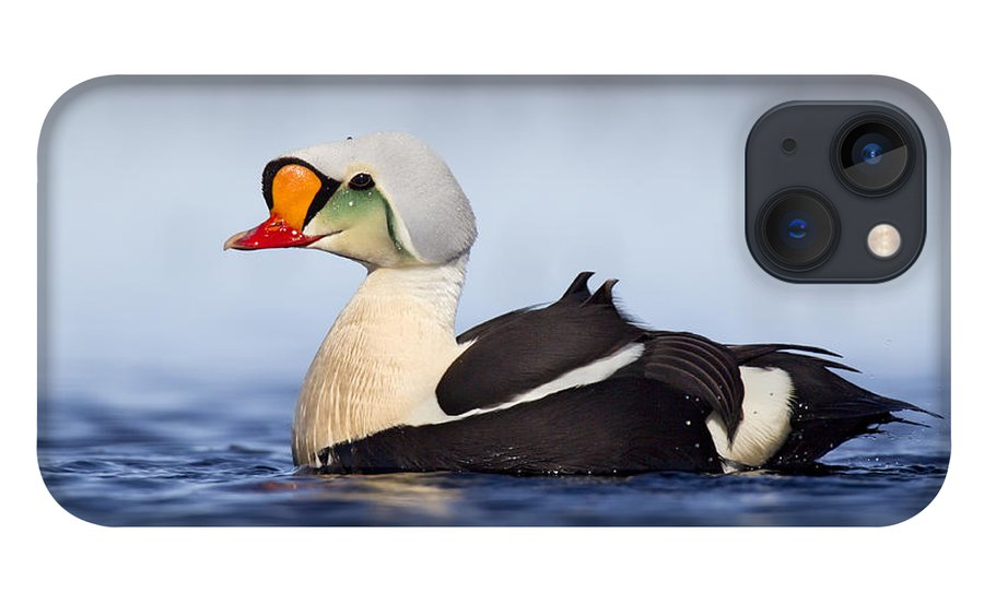 Bia iPhone 13 Case featuring the photograph King Eider Drake In Alaska by Matthew Studebaker